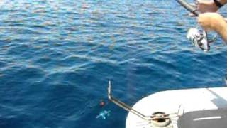 グルクン釣り、熱田つりぐ店の海遊丸にて案内。 9月23日のグルクン釣...