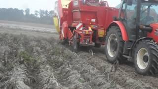 Kopanie ziemniaka Grimme SE 140