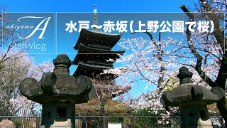 [Staff Vlog] 水戸〜赤坂(上野公園で桜)