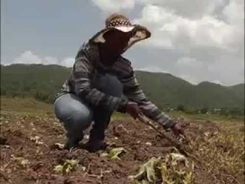 Climate Change and Its Impact on Jamaican Farmers