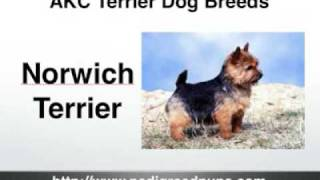 Video Terriers - AKC Terriers - AKC Terrier Dog Breeds download MP3, 3GP, MP4, WEBM, AVI, FLV November 2017