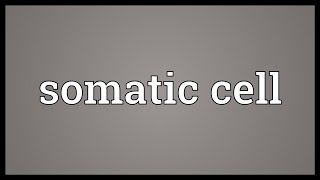 somatic cell meaning