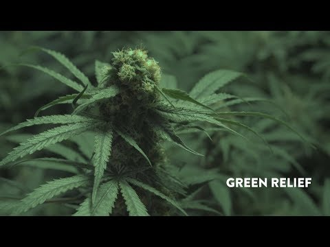 Green Relief Uses Aquaponics to Grow Loads of Marijuana