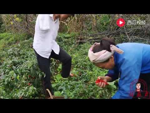 农村无臂陈兹方的妈妈摘了一大堆辣椒,叫他送篮子来帮忙用双脚摘