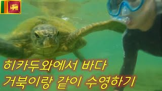 [세계여행 #29] ??스리랑카 히카두와에서 바다 거북…