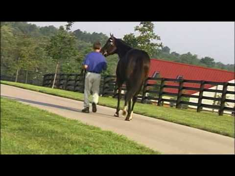 Darley Ad: Songster