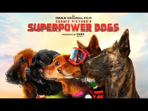 Surf Dog Ricochet's Paw'cademy Awards at IMAX Superpower Dogs film