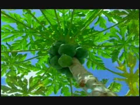Antigua Agriculture