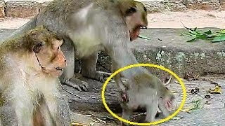 Marcos slap orphan baby monkey Jessie cry very loudly, What wrong with baby monkey Jessie?