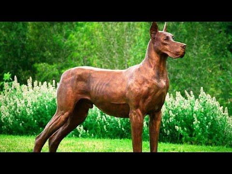 Top 25  Cães Mais Perigosos Do Mundo (o 13 Vc Não Pode Ignorar)