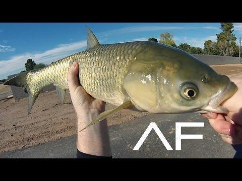 Arizona Canal Fishing
