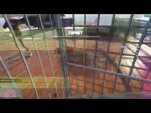 Девушку заперли в клетке видео