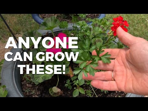 10 Easy Herbs To Grow In Your Garden For Beginners
