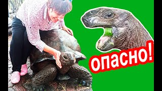 Занзибар Гиды НЕ ПРЕДУПРЕЖДАЮТ Экшн с Черепахами на Занзибаре Необитаемый Остров Призон Занзибар