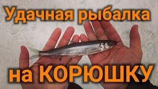 Южная дамба потаскали корюшку на Шпунтах, удачная рыбалка, рыбалка зимой