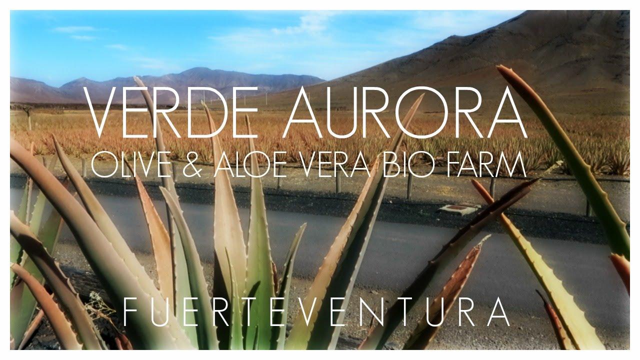 Visit to Verde Aurora Bio Farm Fuerteventura - Olive and Aloe Vera ...