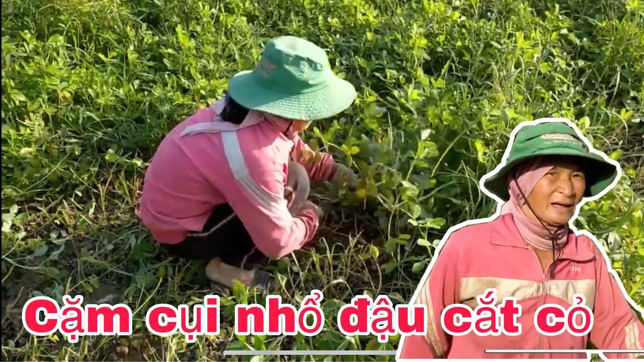 Một ngày cặm cụi nhổ đậu cắt cỏ, mẹ Tính chia sẻ khá buồn với những bình luận ác ý