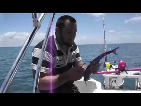 shark fishing moreton bay brisbane