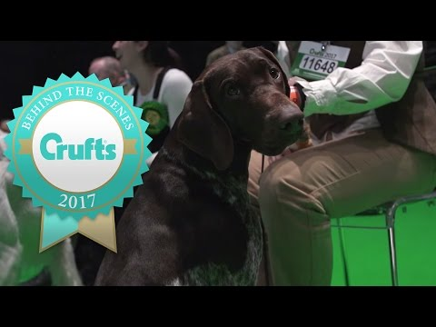 The Best of the Top Dogs from Day 3   Crufts 2017