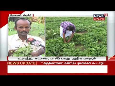 திருச்சியில் சொட்டுநீர் பாசனம் மூலம் மாற்றுப் பயிர்களை பயிரிட்டு, இருமடங்கு மகசூல் பெற்று, பட்டதாரி விவசாயிகள் முன் உதாரணமாக திகழ்கின்றனர்.  #TrichyGraduateFarmer #TamilnaduNews #News18TamilnaduLive  #TamilNews   Subscribe To News 18 Tamilnadu Channel Click below  http://bit.ly/News18TamilNaduVideos  Watch Tamil News In News18 Tamilnadu  Live TV -https://www.youtube.com/watch?v=xfIJBMHpANE&feature=youtu.be  Top 100 Videos Of News18 Tamilnadu -https://www.youtube.com/playlist?list=PLZjYaGp8v2I8q5bjCkp0gVjOE-xjfJfoA  அத்திவரதர் திருவிழா | Athi Varadar Festival Videos-https://www.youtube.com/playlist?list=PLZjYaGp8v2I9EP_dnSB7ZC-7vWYmoTGax  முதல் கேள்வி -Watch All Latest Mudhal Kelvi Debate Shows-https://www.youtube.com/playlist?list=PLZjYaGp8v2I8-KEhrPxdyB_nHHjgWqS8x  காலத்தின் குரல் -Watch All Latest Kaalathin Kural  https://www.youtube.com/playlist?list=PLZjYaGp8v2I9G2h9GSVDFceNC3CelJhFN  வெல்லும் சொல் -Watch All Latest Vellum Sol Shows  https://www.youtube.com/playlist?list=PLZjYaGp8v2I8kQUMxpirqS-aqOoG0a_mx  கதையல்ல வரலாறு -Watch All latest Kathaiyalla Varalaru  https://www.youtube.com/playlist?list=PLZjYaGp8v2I_mXkHZUm0nGm6bQBZ1Lub-  Watch All Latest Crime_Time News Here -https://www.youtube.com/playlist?list=PLZjYaGp8v2I-zlJI7CANtkQkOVBOsb7Tw  Connect with Website: http://www.news18tamil.com/ Like us @ https://www.facebook.com/News18TamilNadu Follow us @ https://twitter.com/News18TamilNadu On Google plus @ https://plus.google.com/+News18Tamilnadu   About Channel:  யாருக்கும் சார்பில்லாமல், எதற்கும் தயக்கமில்லாமல், நடுநிலையாக மக்களின் மனசாட்சியாக இருந்து உண்மையை எதிரொலிக்கும் தமிழ்நாட்டின் முன்னணி தொலைக்காட்சி 'நியூஸ் 18 தமிழ்நாடு'   News18 Tamil Nadu brings unbiased News & information to the Tamil viewers. Network 18 Group is presently the largest Television Network in India.   tamil news news18 tamil,tamil nadu news,tamilnadu news,news18 live tamil,news18 tamil live,tamil news live,news 18 tamil live,news 18 tamil,news18 tamilnadu,news 18 tamilnadu,நியூஸ்18 தமி