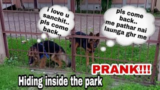 hiding in the park prank with my dogs