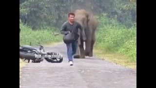 Tembo awaumbua wachina mbugani