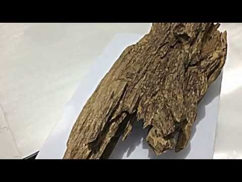 OLD TIGER Agarwood from brunei High Quality 203.41gr