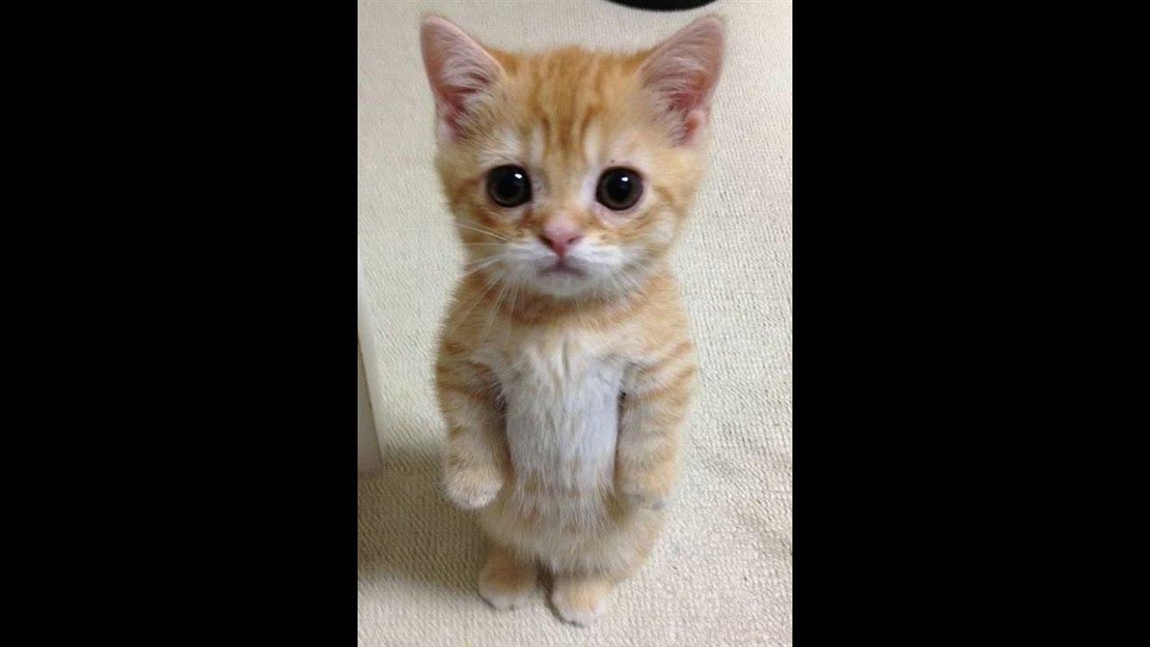 кошки картинки любовь