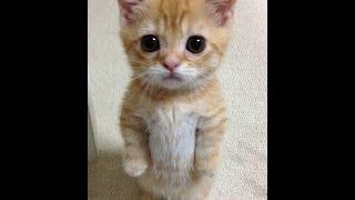 Кошки и любовь