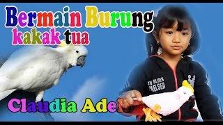 Play Toys kaka tua bird - Burung kak Tua- happy playing- Fun Kids