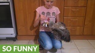 Pet chicken performs variety of impressive tricks