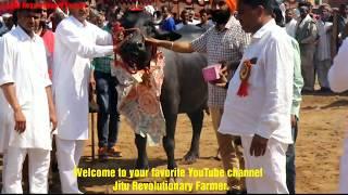 Winner DHANNO Buffalo from LAXMI DAIRY FARM facilitated by Dr Ashok @ Singhwa Khas Mela.