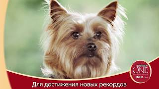 Большой рекорд маленьких собак с Purina ONE® МИНИ