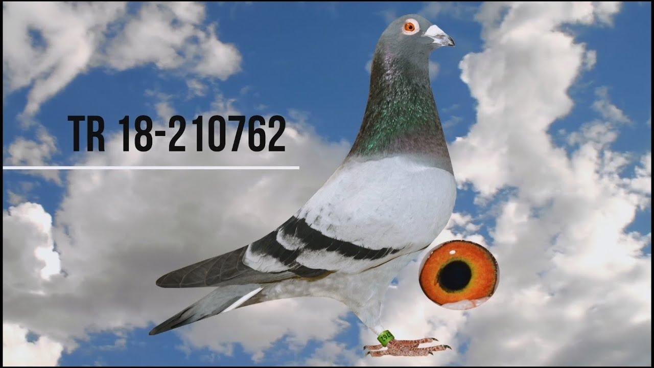 Download TR18 210762 Ferhat Gülez www.tgihale.com