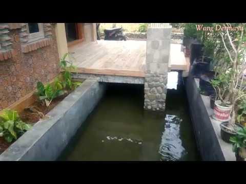 Kolam Ikan Di Bawah Teras Rumah Youtube