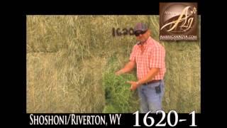 8-26-15 American Ag Video Auction Lot 1620-1 - 2015 2nd Cut, Alfalfa, 4x4, Shoshoni/Riverton, WY