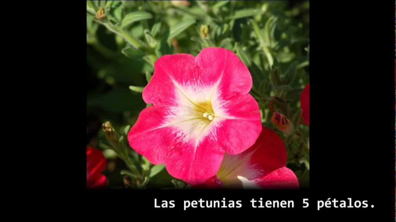 Algo pasa con Phi - Capítulo 6 - Flores, pétalos y la serie de Fibonacci