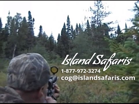 Newfoundland Moose Hunting - Island Safaris (Full Hunt)