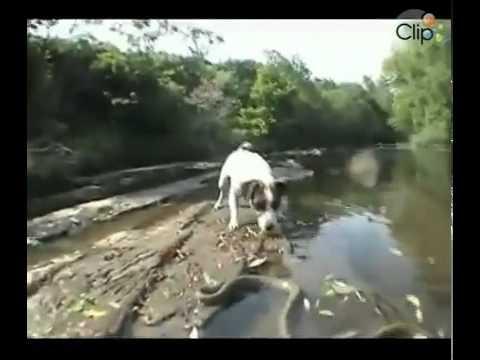 Xem video clip Cuộc chiến giữa chó và rắn Video hấp dẫn Clip hot Baamboo com SD