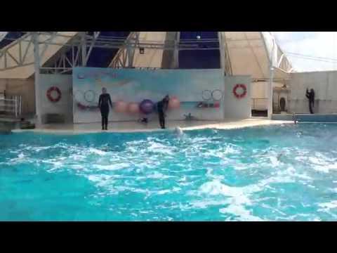 Крым дельфинарий Коктебель полная версия/  Dolphinarium on the Crimean Peninsula