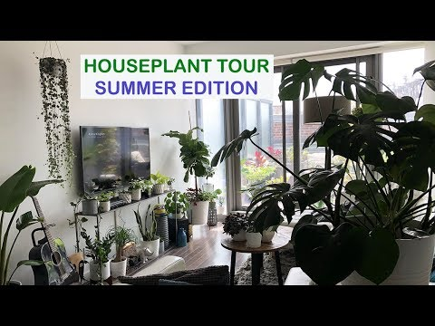 HOUSEPLANT TOUR | SUMMER 2018 | Crazy Plant Guy