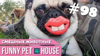 СМЕШНЫЕ ЖИВОТНЫЕ И ПИТОМЦЫ #98 АВГУСТ 2019 | Funny Pet House