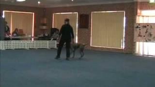 "Dances With Dogs Freestyle -weimaraner Cooper & Handler Michelle ""keep On Dancing"""
