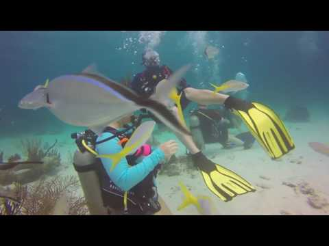 Stingray City Grand Cayman 2017