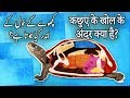 What's inside a turtle's shell? Hindi-Urdu Can Turtle Remove Their Shell?