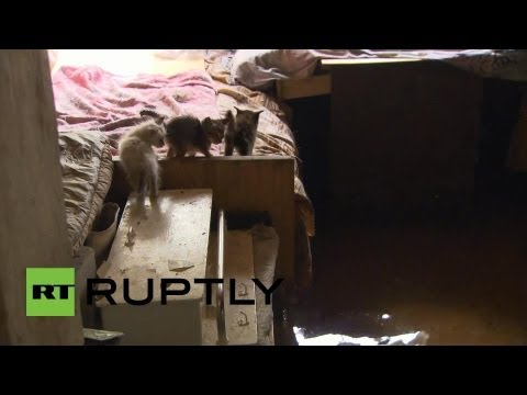 Russia: Kittens stay high and dry as floodwaters rise