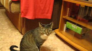 Кошка смотрит телевизор