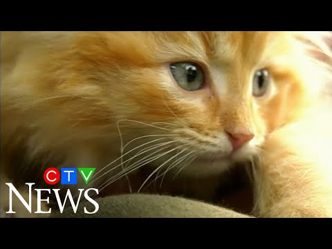 Kittens thrown from a moving vehicle in Windsor, Ont.