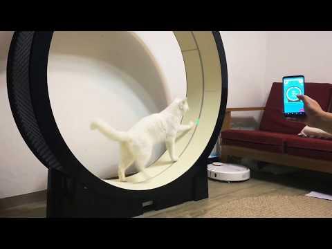 Korean Company Creates Smart Treadmill for Cats