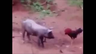 Lồng tiếng động vật hài hước